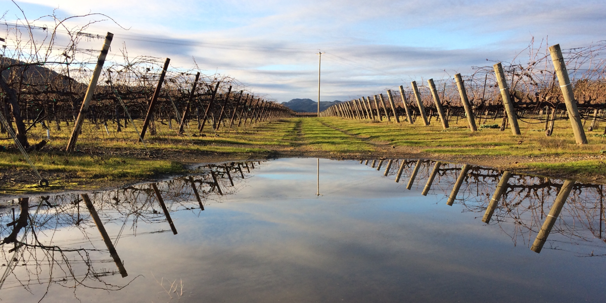 A View of Dry Creek Valley through a Puddle
